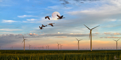 Windmills JudithGap_with geese_12x24